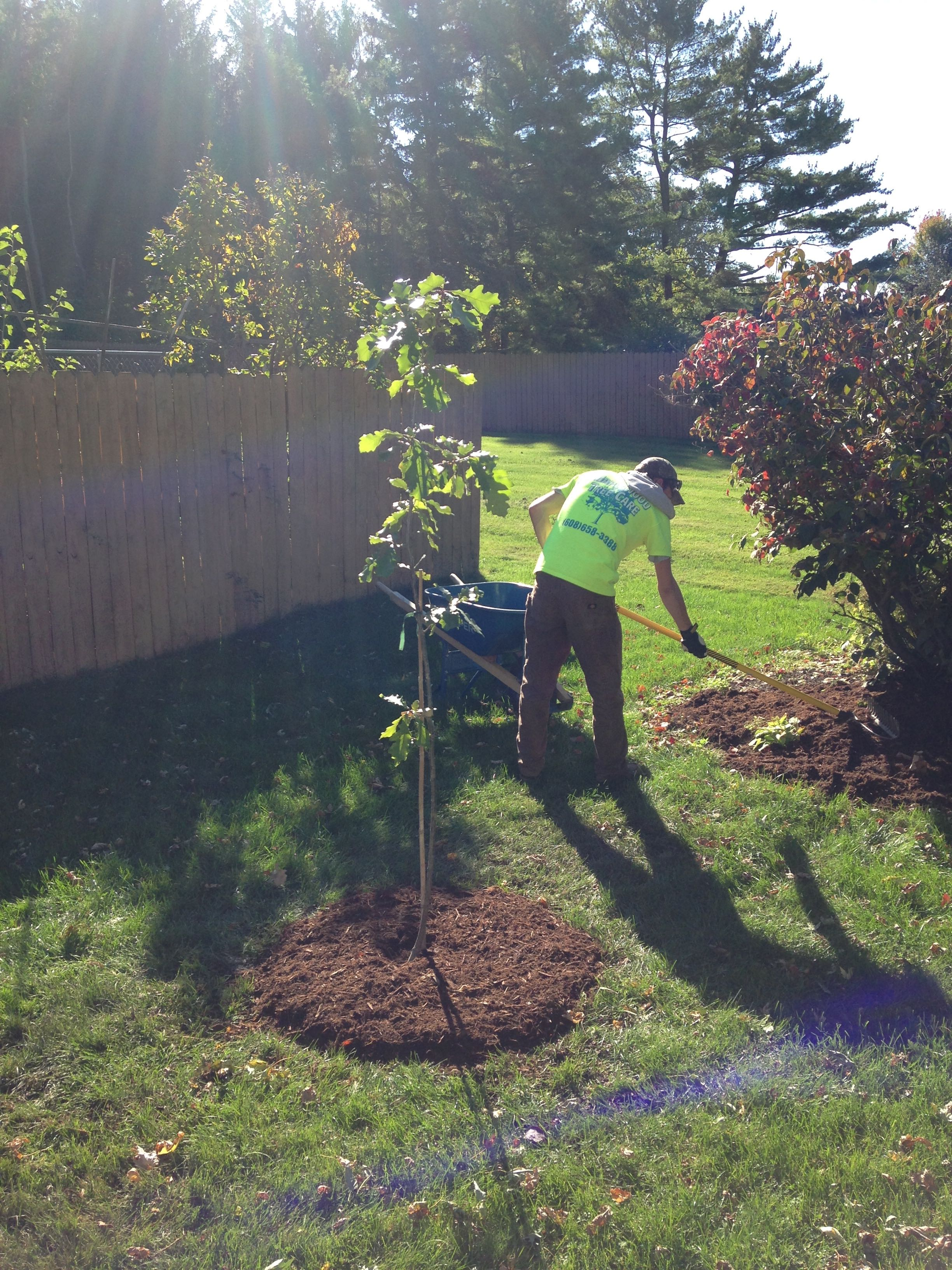Maple Wood Tree ~ Maplewood tree care in madison wi